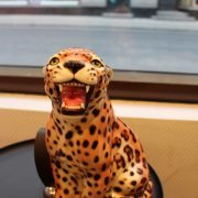 leopard-30